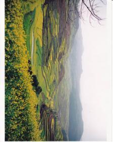 彩色艺术照片10张(25x20)
