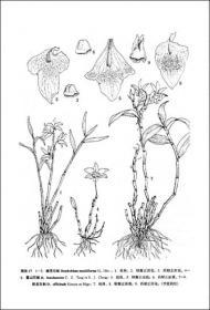 中国植物志 第十九卷