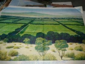 沙漠变绿洲   七十年代挂图   2开