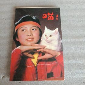 明信片 喵(10张全)
