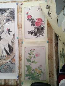 牡丹+菊花图/BT(外来之家