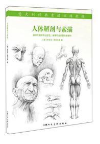 人体解剖与素描