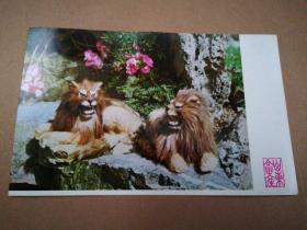 早期外贸出口产品宣传卡片:皮毛玩具(卧式对狮)