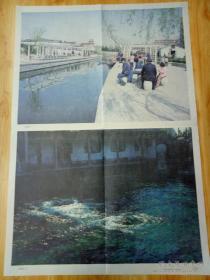 渠晋湘摄影的彩色图片:趵突泉(此为对开画。宽52厘米,高76厘米;分为上下两幅;上图为趵突泉全景,下图为近景;印刷品;原为教学挂图)