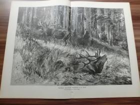 【现货】1889年巨幅木刻版画《鹿王争霸,筋疲力尽》(Abgekämpft) 尺寸约54.2*40.8厘米 (货号600149)