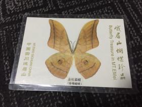 峨眉山蝴蝶珍品:金丝猫蝶【蝴蝶标本】