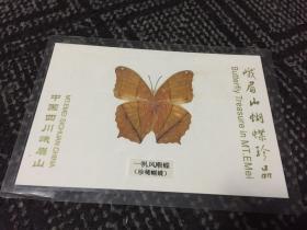峨眉山蝴蝶珍品:一帆风顺蝶【蝴蝶标本】