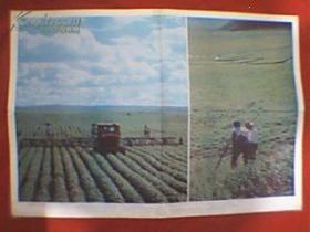 """摄影彩色图片:""""北大荒""""变""""北大仓""""(此为对开画,宽76厘米,高52厘米;表现的是昔日只长荒草不长粮的黑龙江省嫩江平原、三江平原和黑龙江谷地、如今发生的天翻地覆的变化,千古荒原已建设成为机械化生产的国营农场群,每年向国家提供大量小麦、大豆和稻谷;此图包括《长势旺盛的黑龙江大豆田》、《勘察队员在三江平原为开垦的荒地上测量》两幅图;印刷品,原为教学挂图)"""