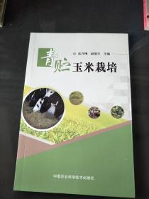 青贮玉米栽培