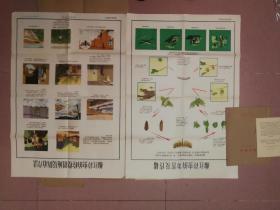 彩色农业宣传画页