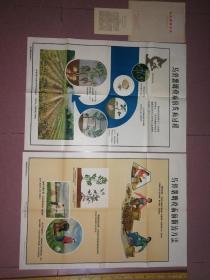 六十年代,农村农业宣传画