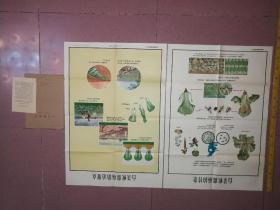 解放初期农村宣传画