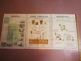 三张早期农业宣传画,不是一套