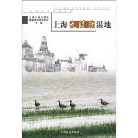上海九段沙湿地