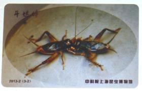 中科院上海昆虫博物馆纪念卡-斗蟋蟀(1张)