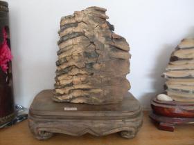 远古生物化石(包邮)