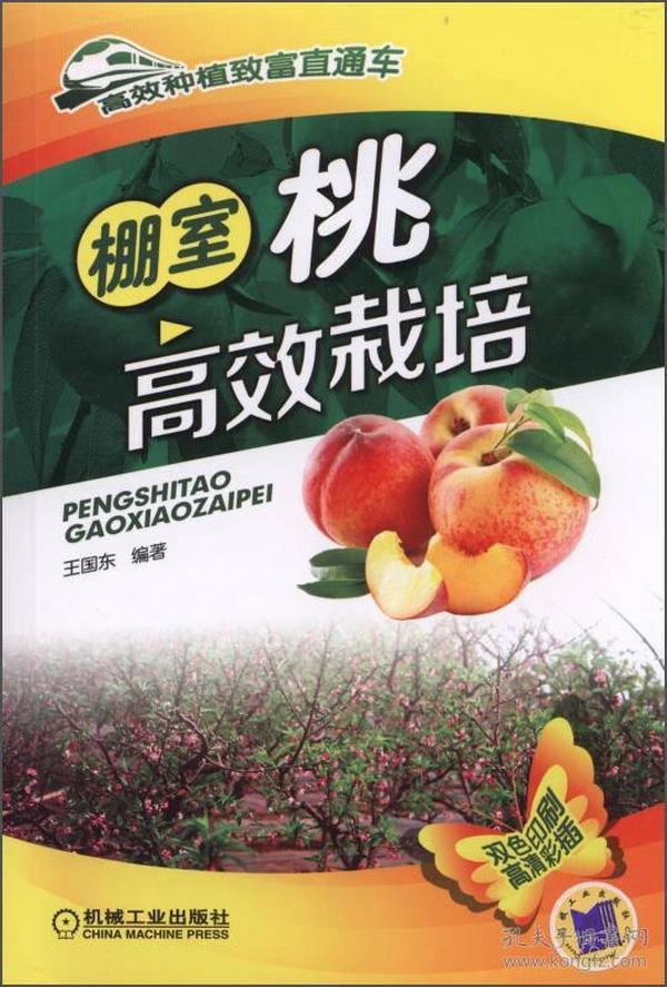 棚室桃高效栽培