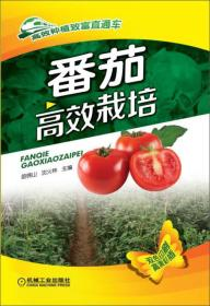 高效种植致富直通车:生姜高效栽培