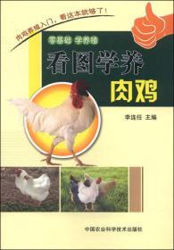 看图学养肉鸡