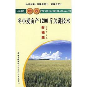 冬小麦亩产1200斤关键技术
