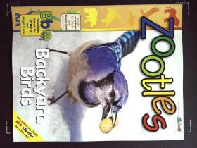 Zoobooks ZOOTLES backyard birds 英文儿童动物摄影鸟杂志