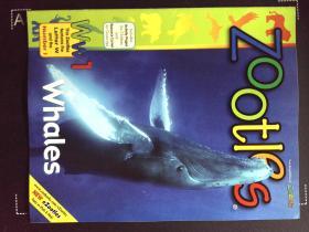 Zoobooks ZOOTLES whales 英文儿童动物摄影鲸鱼杂志
