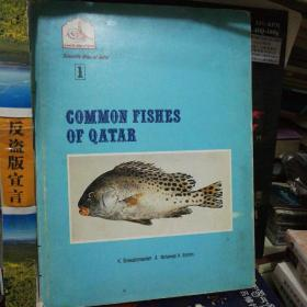 COMMON FISHES OF QATAR