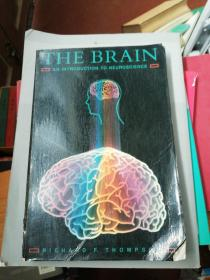 THE  BRAIN  AN  INTRODUCTION  TO  NEUROSCIENCE