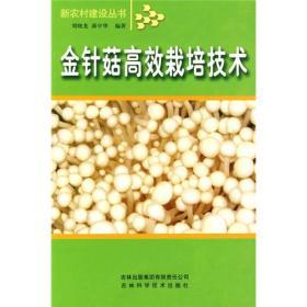 金针菇高效栽培技术