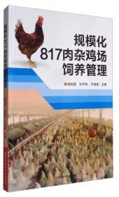 规模化817肉杂鸡场饲养管理