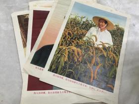 伟大的导师、伟大的领袖毛主席万岁!万岁!!万万岁!!! 六张一套 八开印刷品 新华通讯社出版新华印刷厂印刷