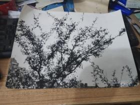 大幅黑白老照片