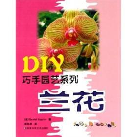DIY巧手园艺系列:兰花