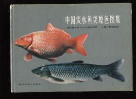中国淡水鱼类原色图集
