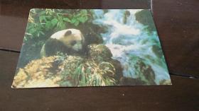 熊猫明信片 两张