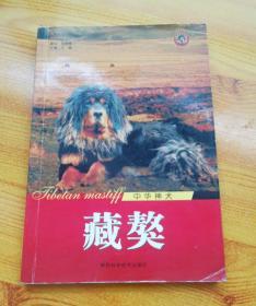 世界名犬系列:金色炫舞金毛寻回猎犬