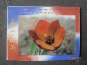 高山花卉  邮政明信片 10张
