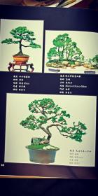 花卉盆景集萃(大16开精装)