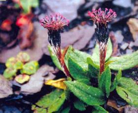 云南野生植物