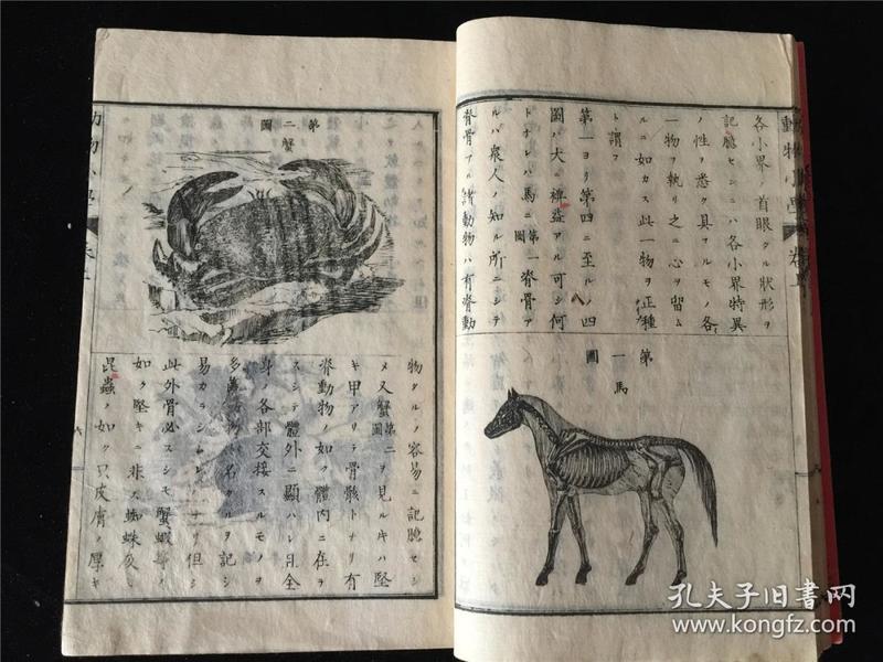 和刻带版画插图的动物小学2册全。明治14年木刻。