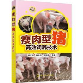瘦肉型猪高效饲养技术