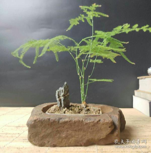 天然 石头 原石 花盆 种花 石盆 盆景