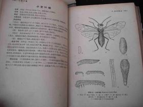 1964年出版的精装本----图片资料--【【农业昆虫图谱】】---稀少