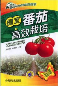 棚室番茄高效栽培-高效种植致富直通车