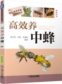 高效养中蜂-双色印刷