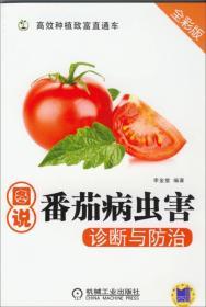 高效种植致富直通车:图说番茄病虫害诊断与防治