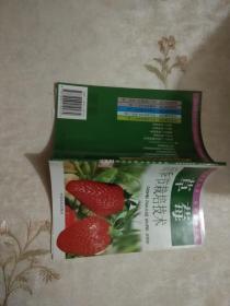 草莓反季节栽培技术