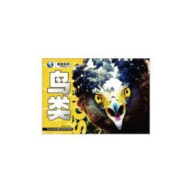 鸟类-探索科学百科丛书