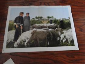 文革宣传画毛主席和牧羊人谈话【杂志中页】外文