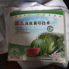 西瓜高效栽培技术